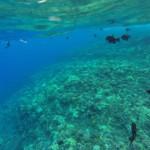 Морското дъно до кратера Молокини