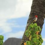 Пъстра флора и фауна на Хавай