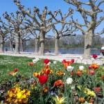 Променада край Рейн