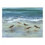 птици на брега